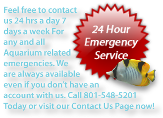 Contact us immediately if you are having an aquarium related emergency.